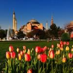 istanbul-festival-na-laleto