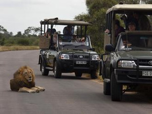 safari-iujna-afrika